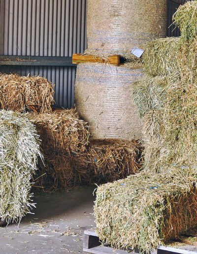 Hay and Straw